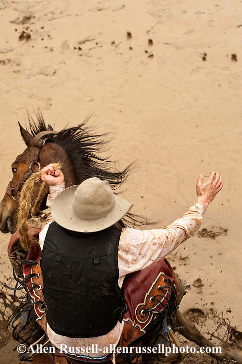 Saddle Bronc rider rides in mud, Miles City Bucking Horse Sale, Montana