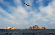 A Western Seagull soars over the coastline of Southeast Farallon Island, part of the Farallon National Wildlife Refuge, May 12, 2005.  The refuge located 28 miles west of San Francisco is managed by the U.S. Fish and Wildlife Service and is the largest seabird breeding colony south of Alaska.  Thirty percent of California's seagulls breed on the island.