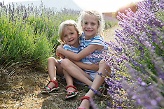 Lordington Lavender Mini Shoots - Austin-Peggs