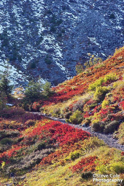 A Change of Seasons - Heather Meadows