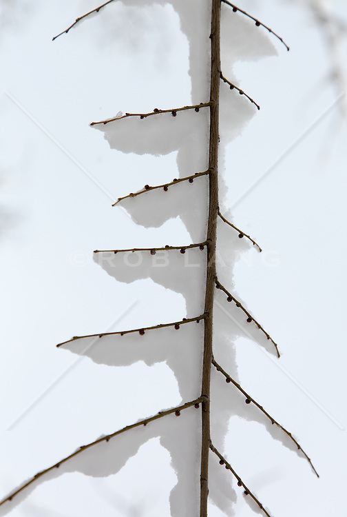 tree branch covered with fresh snow