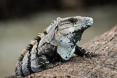 Reptile & Amphibian Stock Photos