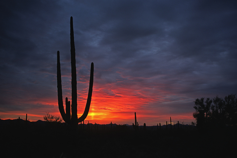 Sunset at Saguaro National Monument