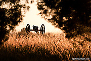 A cannon in a field of golden grass at Manassas National Battlefield.