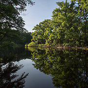 EASTVILLE, VA - JUNE 20: Custis Pond, inside the Savage Neck Nature Preserve is pictured on Friday, June 20th, 2014 near Eastville, Va. (Photo by Jay Westcott/For The Washington Post)