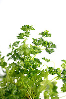 Closeup of parsley on white background