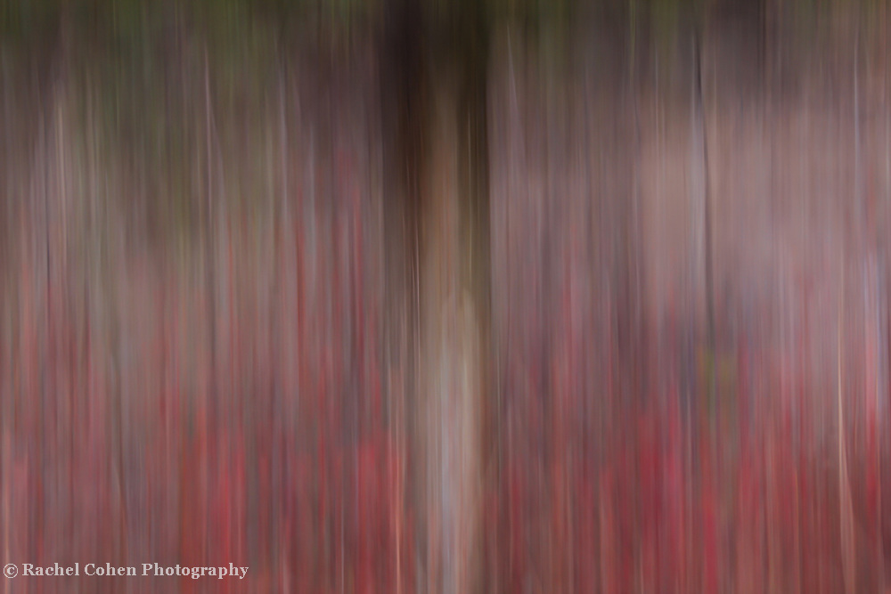 &quot;Realm of Understanding&quot;<br /> <br /> A wonderful vertical lined abstract image!!Let your imagination take you away!!<br /> <br /> Nature Abstracts by Rachel Cohen
