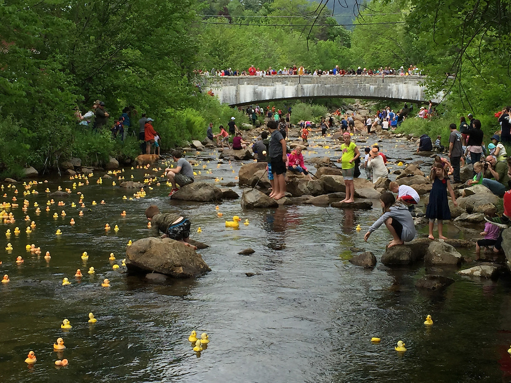 The annual duck race in the quaint village of Jackson, New Hamphshire