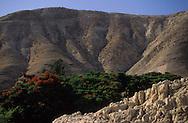 """West bank Judea desert  jericho  Israel     ///  le désert de Judée / colonie """" Mitzpe Jéricho""""  jericho  Israel   ///     L931005d  /  R00061  /  P116519"""