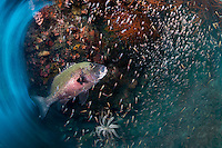 Sweetlips and Sweepers, motion blur<br /> <br /> Shot in Indonesia