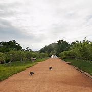 Guinea Fowl on Guava Tree Avenue