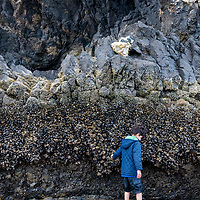 A young boy exploring the tide pools and mussel-lined sea stacks at low tide near Haystack Rock on Cannon Beach, Oregon.