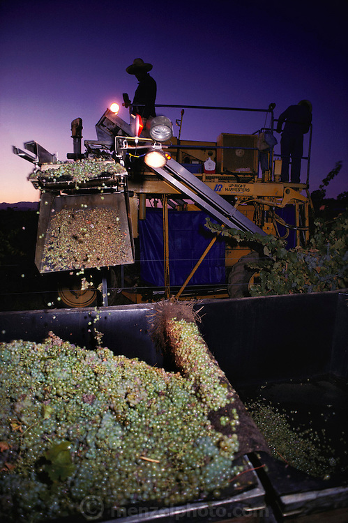 Napa Valley, California. Machine harvesting of chardonnay grapes at pre-dawn hours when it is cool. Trefethen Vineyards.
