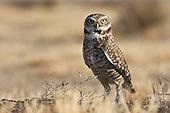 Raptors & Owls