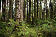 The forest at SGang Gwaay, a UNESCO World Heritage Site in Haida Gwaii.