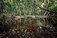 Swampland in interior of Little Corn Island, Nicaragua. Copyright 2017 Reid McNally.