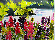 "Lupines. Watercolor. 12x16"". ©JoAnn Hawkins."