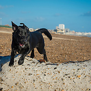 Images of Ellie and Rookie at Hove beach.
