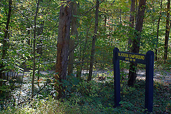 08 October 2013:   A gravel lane leads off the main road to take you to Blackgum Campground in Yellowwood State Forest.<br /> <br /> Yellowwood State Forest was created on leased federal land in 1940.  It was later (1956) deeded to the state of Indiana.  More than 2000 vacant and eroded acres were planted with pine, black locust, black walnut, and red and white oak.  Yellowwood Lake is 133 acres and about 30 feet deep. This image was produced in part utilizing High Dynamic Range (HDR) processes. It should not be used editorially without being listed as an illustration or with a disclaimer. It may or may not be an accurate representation of the scene as originally photographed and the finished image is the creation of the photographer.