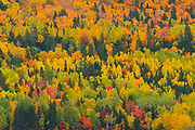 Autumn colors of mixedwood forest in Les Notre-Dame Mountains (Appalachian Mountains). Great Lakes - St.  Lawrence Forest Region.<br />