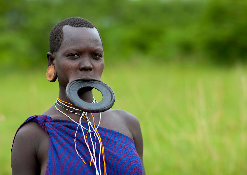Piercing and lip plates are a strong part of the Suri culture. These traditional adornments are worn by almost all the adult Suri women. Ear labrets are worn both by women and men. When a Suri woman is about to be married, usually in her teens (around 14 or 15), she disappears from the village life to live in her family's hut. The gap between her front lip and the flesh below is pierced and gradually stretched. In the beginning a hole is made in the lip with a wooden stick. The strecth continues as successively bigger discs of clay or wood are accomodated by the disfigured lip. Generally the two lower front teeth are pulled (or knocked) out to aid the process. The final size of the plates determines how many cattle the woman will receive as a dowry. Some women have stretched their lips so as to allow plates up to sixteen inches in diameter. Having a lip plate is considered a sign of beauty. The origins of this tradition are unknown. Sometimes the lip is broken by the pressure of the lip plate. This is a very big problem for girls because men will consider them as ugly, and they won't be able to marry anyone in the tribe apart from old men or ill people. Although it is seen as a sign of beauty nowadays, it is said that the disfigurement began as a way to prevent slavers from seizing Surma women. Over the last few years, a growing number of young Suri women refuse to have their lip pierced. The  increasing exposure and opening  of the Suri to other cultures is the main reason of this trend. Indeed, some Suri teenagers have the opportunity to study in Addis Abeba, and once back in their village, they tend to try to change customs and traditions. Mursis have the same tradition, as Mursi women also wear lip plates ; whereas Nyangatom, including men, wear smaller lip plates.