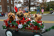 12/1/12 12:42:33 PM - Souderton, PA: .A group of shelter dogs looking for a home ride in a red wagon during the Souderton/Telford Holiday Parade December 1, 2012 in Souderton, Pennsylvania -- (Photo by William Thomas Cain/Cain Images)