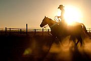 Cowboy with a rope silhouetted while riding horse at sunset.  Twin Falls, Idaho.