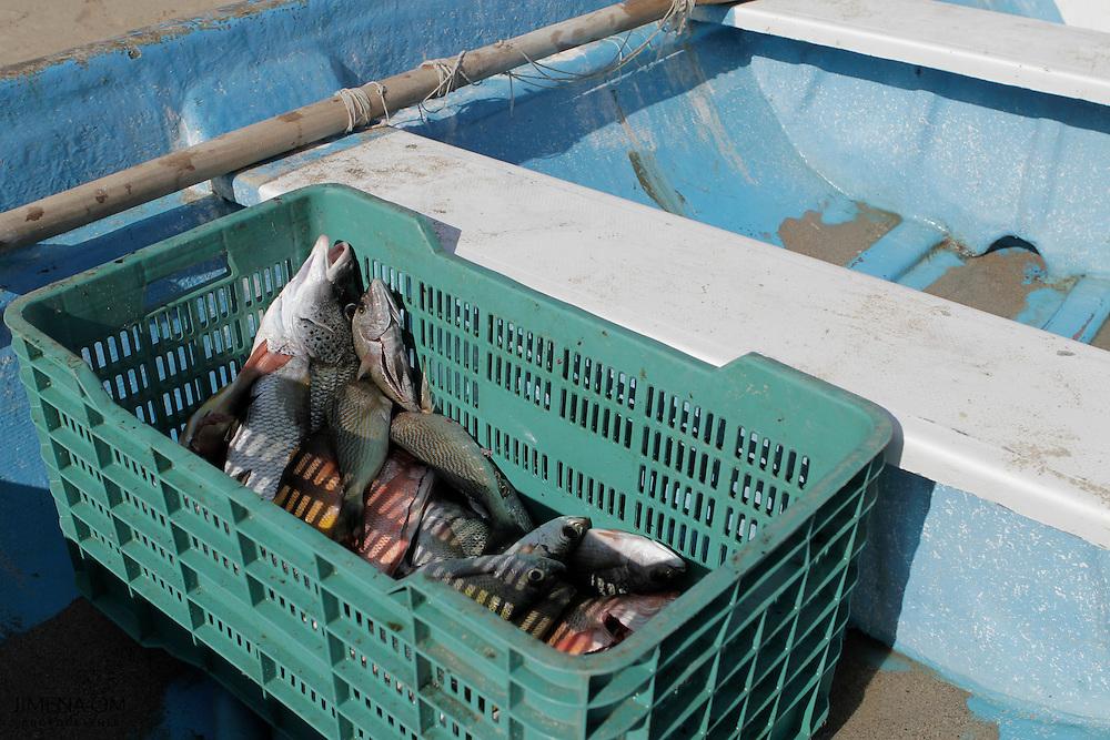 La pesca artesanal ribereña en Jalisco aporta apenas 1.3% del volumen y menos de 1% de la riqueza en este ramo del sector primario, en México.