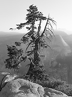 http://Duncan.co/glacier-point-tree/
