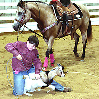 4-H RIDING AND ROPING<br /> (Floyd Ingram / Buy at photos.chickasawjournal.com)<br /> Zack Edington, 11, and his horse Cupcake, work to secure his stock at the 4-H District Horse Show held at the Chickasaw County Agri Center Saturday, June 4. Edington, the son of Larry and Jessie Edington, of Chickasaw County, was one of more than 200 people in town for the event. It was the first time for the District Show to be held in the newly renovated Agri Center in Houston.