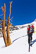 Backcountry skier climbing Piute Pass, Inyo National Forest, Sierra Nevada Mountains, California USA