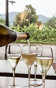 ITALY, Franciacorta area, Monticelli Brusati, Castelveder winery, Camilla Alberti, Vice President of Strada del Franciacorta