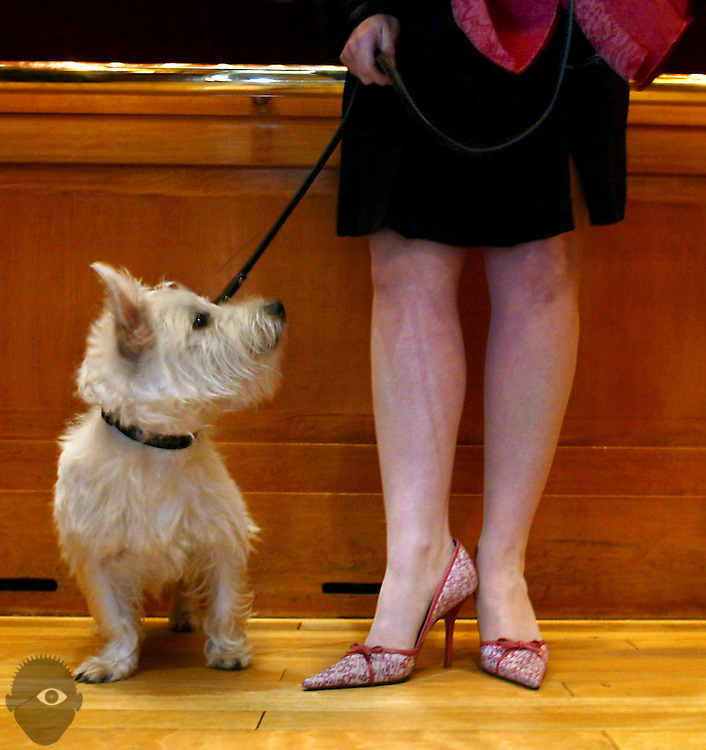 Maureen Croxford and her westie named Winston Spencer Croxford  ride the elevator at the 5th Avenue Suites....