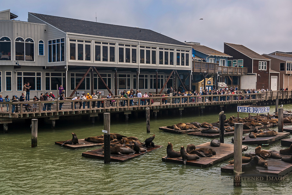 Tourist visitors watching sea lions on docks at Piier 39, along San Francisco Bay, San Francisco, California