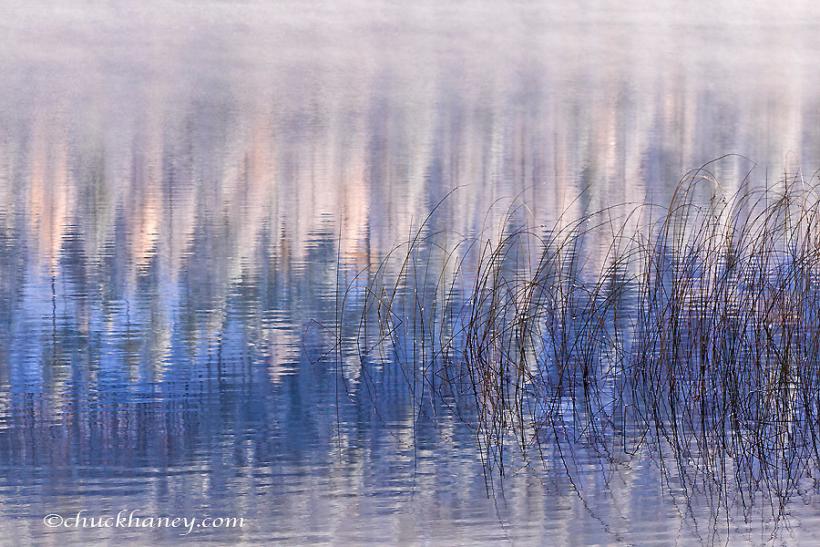 Reeds and refelction at Beaver Lake in the Stillwater State Forest near Whitefish, Montana, USA