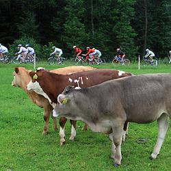 20080614: Cycling - Tour de Slovenie 4th stage
