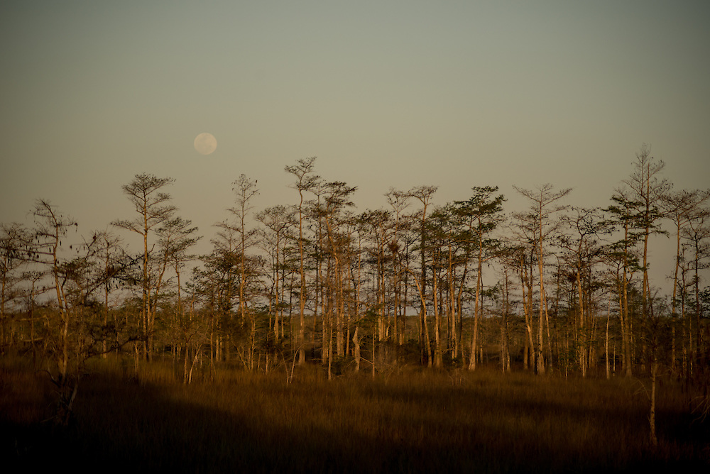 The full moon rises over the Big Cypress National Preserve