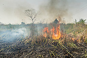 17 MARCH 2014 - BUNG THONG LONG, PATHUM THANI, THAILAND: A fallow field burns in Pathum Thani province. It hasn't rained in central Thailand in more than three months, impacting agriculture and domestic water use. Many farms are running short of irrigration water and salt water from the Gulf of Siam has come up the Chao Phraya River and infiltrated the water plants in Pathum Thani province that serve Bangkok.PHOTO BY JACK KURTZ