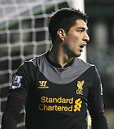 Picture by David Horn/Focus Images Ltd +44 7545 970036.28/11/2012.Luis Suarez of Liverpool during the Barclays Premier League match at White Hart Lane, London.