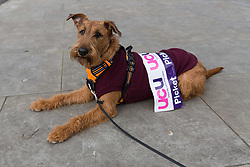 © Licensed to London News Pictures. 23/02/2018. London, UK. A dog wearing a banner watches members of the University and College Union (UCU) take part in a strike protest over pensions outside City University in London. City University is one of two universities that have warned lecturers they will be partly responsible for student failures and could face legal action if they strike. Photo credit: Vickie Flores/LNP