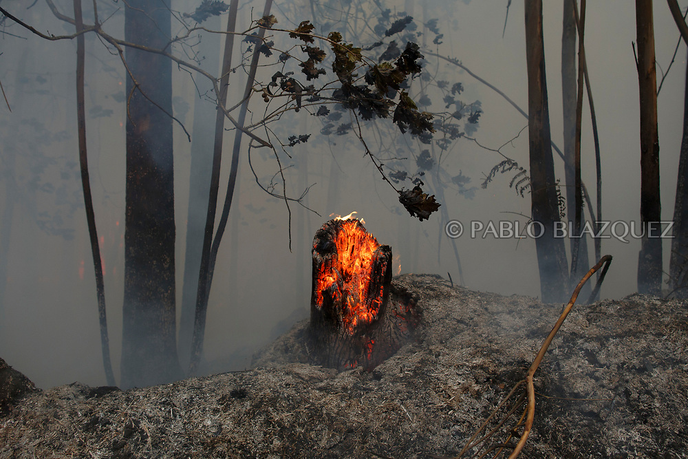 LEIRIA, PORTUGAL - JUNE 19:  Trees burn after a wildfire took dozens of lives on June 19, 2017 near Castanheira de Pera, in Leiria district, Portugal. On Saturday night, a forest fire became uncontrollable in the Leiria district, killing at least 62 people and leaving many injured. Some of the victims died inside their cars as they tried to flee the area.  (Photo by Pablo Blazquez Dominguez/Getty Images)