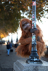 EDITORIAL USE ONLY An ultra-realistic animatronic Orangutan appears on Embankment in London to highlight the threat to the survival of the species due to deforestation caused by palm-oil production, following Iceland's Christmas advert being banned.