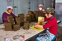Chine, Province du Sichuan, Mingshan, usine de thé en brique destiné au marché tibetain  // China, Sichuan province, Mingshan, tea factory, brick of tea for tibetan market