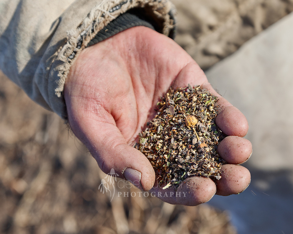 This hand holds ten to twelve conservative seed species for the new prairie planting. These conservative species are highly desired in restorations, because they were historically present in pre&ndash;settlement and unaltered prairies. <br /> <br /> These conservative seeds are hand&mdash;planted throughout the entire new field by dropping about a dozen seeds on the ground every few feet and rubbing them into the soil.