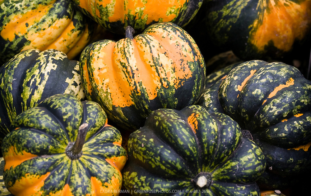 Orange and green acorn squash