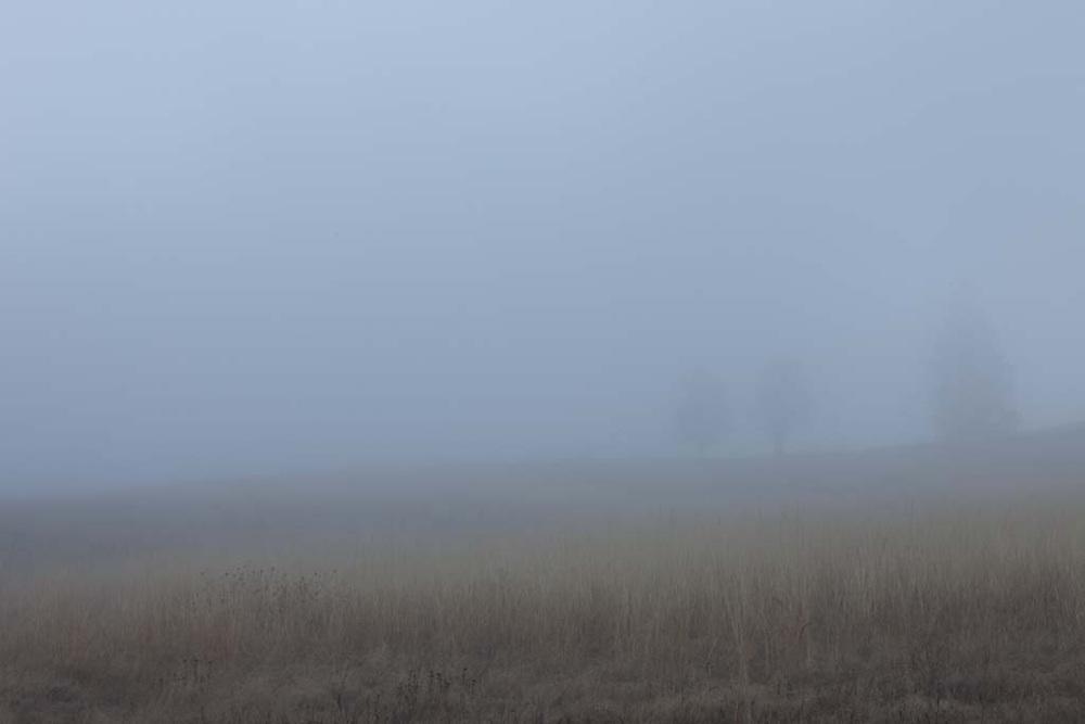 Fog in Mosier, Oregon
