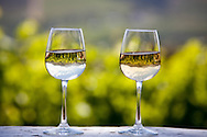 Two glasses of white wine sitting on a ledge next to a vineyard near Franschhoek, South Africa. The vineyard and surrounding countryside are reflected in the glasses. http://www.gettyimages.com/detail/photo/wineglasses-with-vineyard-reflection-south-africa-royalty-free-image/85823934