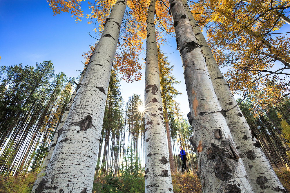 Photographer photographs aspens in the Seeley-Swan Valley, Montana
