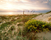0505-1052 ~ Copyright: George H.H. Huey ~ Morning storm over Gulf of Mexico and foredunes, with camphorweed and sea oats.  Padre Island National Seashore, Texas.