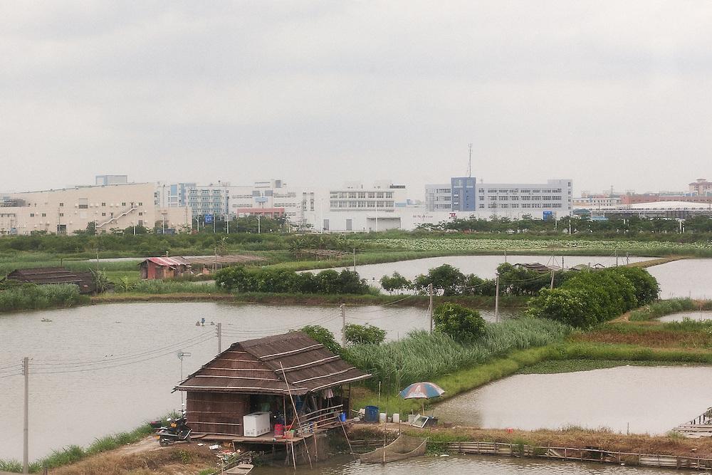Des bassins piscicoles devant la banlieue industrielle de Zhongshan. La concurrence est rude pour la possession des terres. 0 l'arrière plan le district de Xiaolan où à eu lieu l'une des grèves du constructeur Honda.